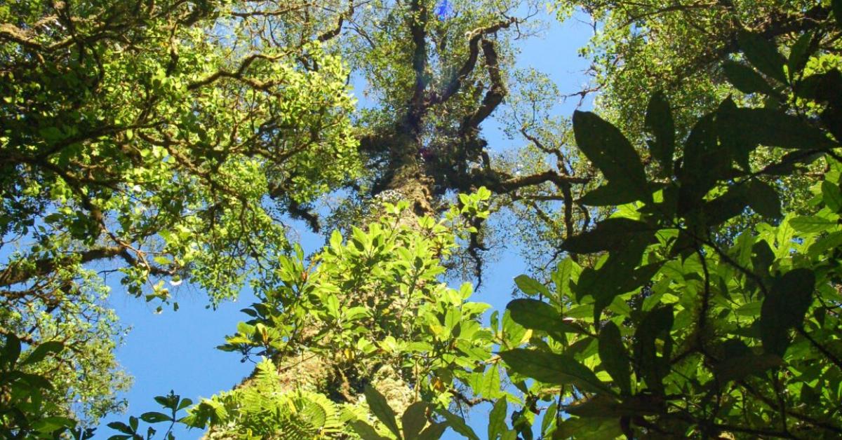 Samenwerking Vakantieadres Onbekend en Trees for All_def